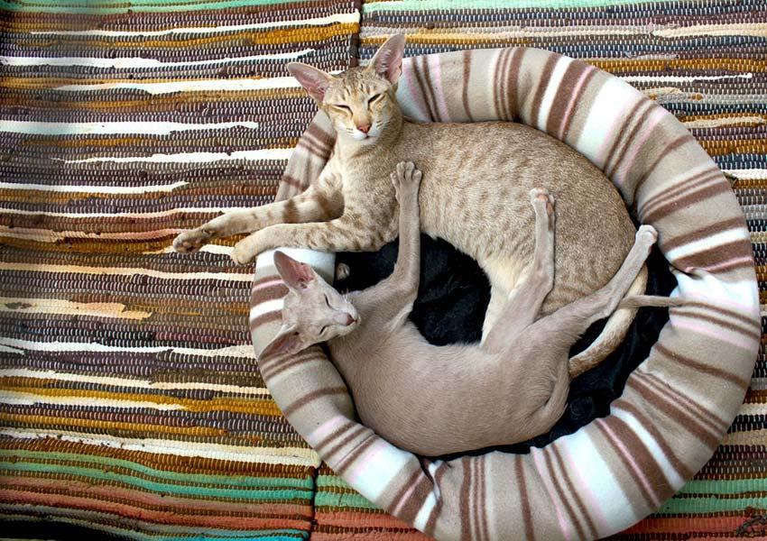 verzekering kat belgië ziektekostenverzekering voor katten en huisdierbaasjes